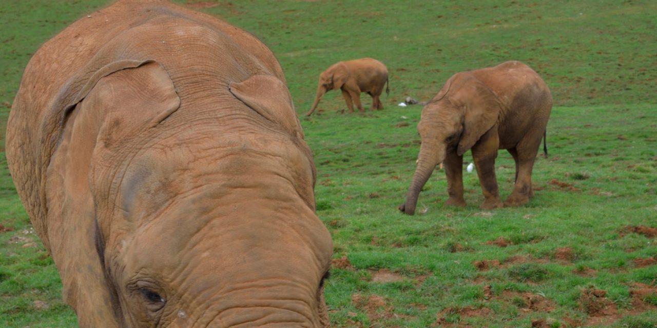 Parque de la Naturaleza de Cabárceno, una belleza natural con más de 150 especies de animales