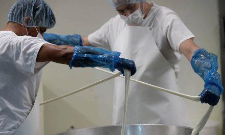 Elaboran queso Oaxaca y panela…¡en España!