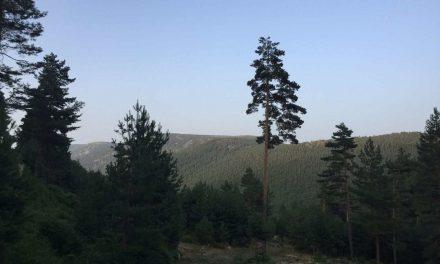 Navafría: montaña, río, bosque y… Frida Kahlo