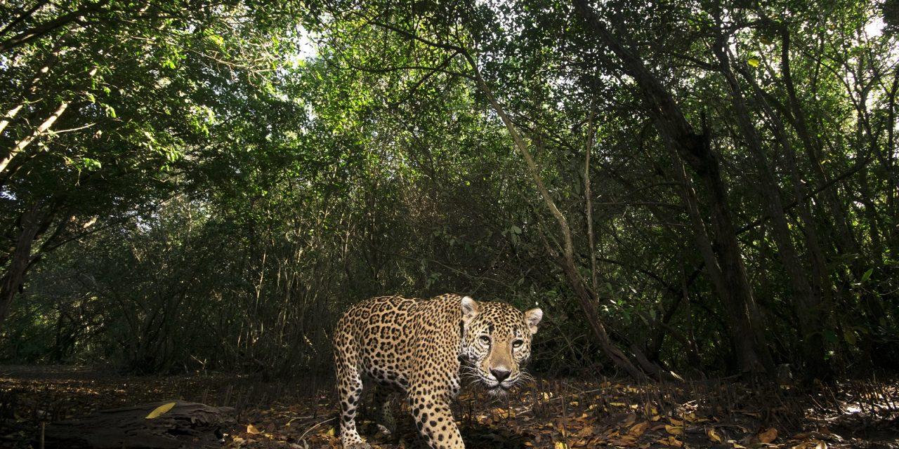 Fotografías mexicanas que protegen la vida salvaje con cada 'disparo'