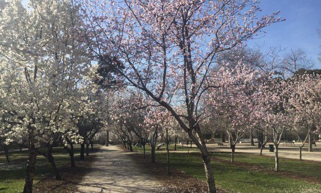 Los colores de la primavera en Madrid