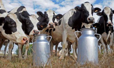 Revisar condiciones comerciales de leche para luchar contra desnutrición en México