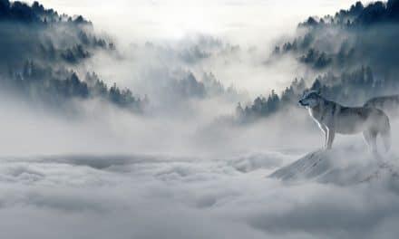 Lobos de la mitología para proteger las especies amenazadas en México