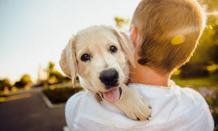 Consejos para proteger a nuestras mascotas de la contaminación de las ciudades