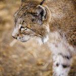 España: especies amenazadas y en peligro de extinción