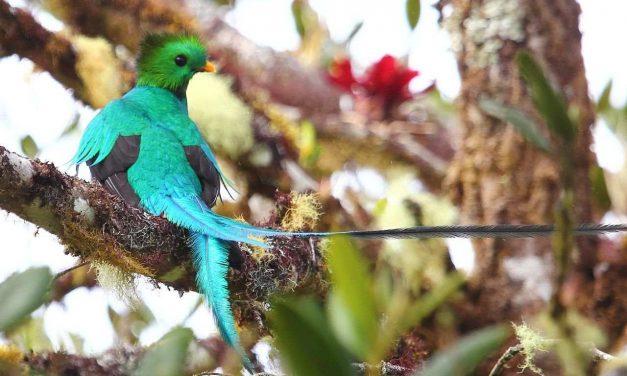 México: especies amenazadas y en peligro de extinción