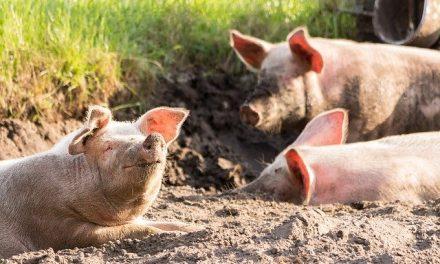 Contra el maltrato animal en México