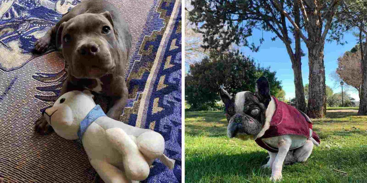 René y Hope: esperanza para animales maltratados en México y en España