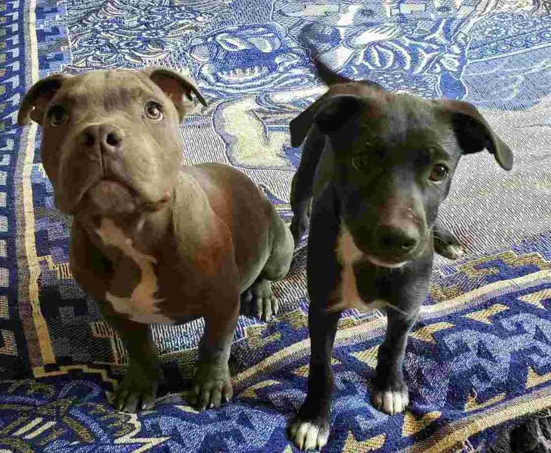 René y Pablito, cachorros del refugio Xollin, México