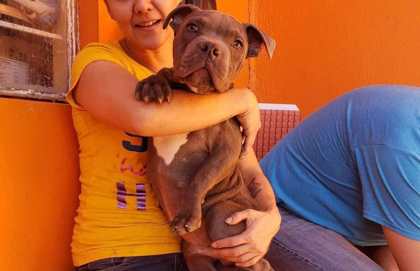 René, perro en adopción en el refugio Xollin