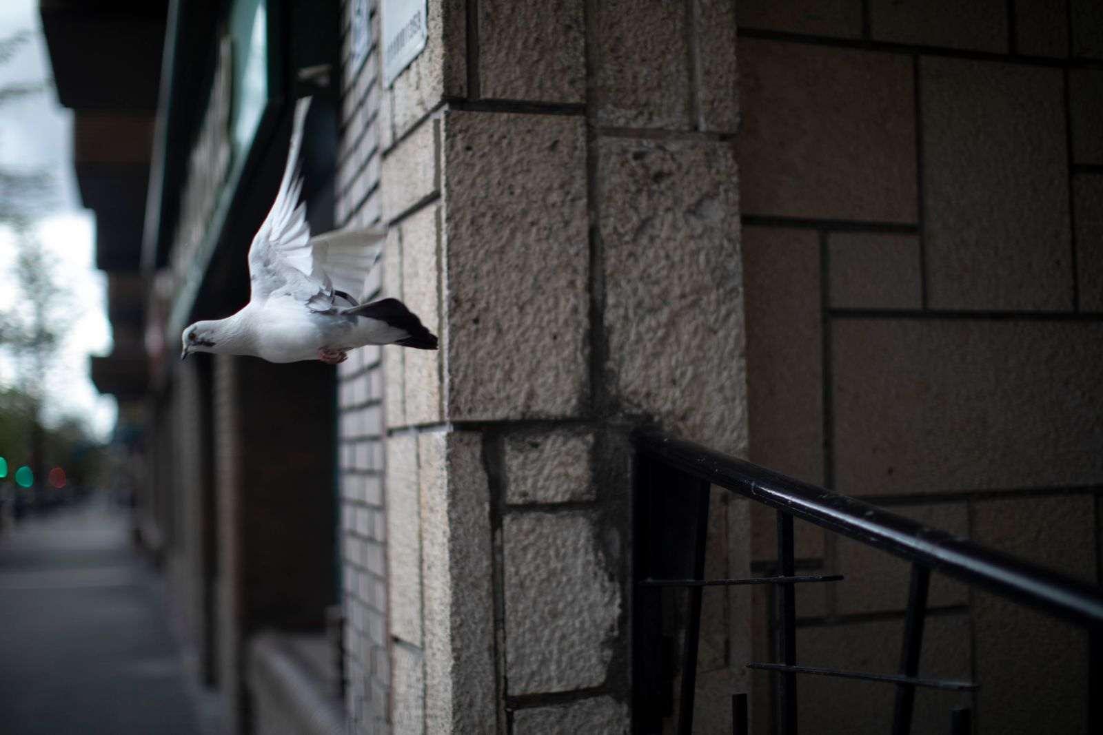 Confinamiento en Madrid: una ciudad, distintas realidades