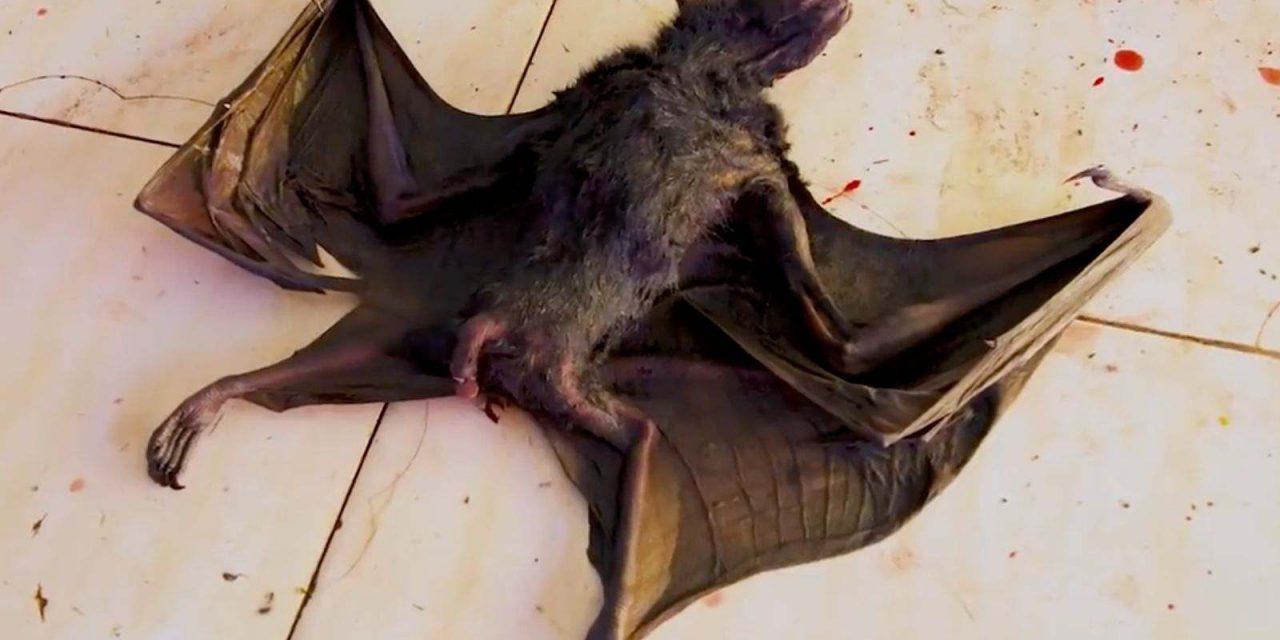 Comercio de animales y destrucción 'humana' en el origen del coronavirus