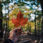 4 cosas importantes que debes saber antes de visitar Canadá