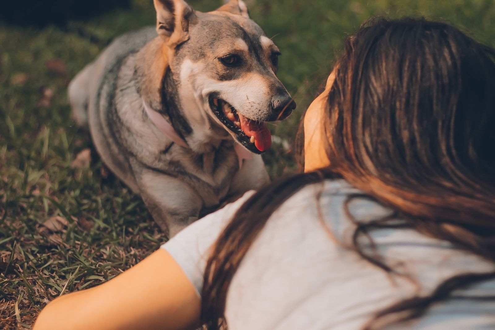 ¿Puede mi mascota contagiarme el coronavirus?