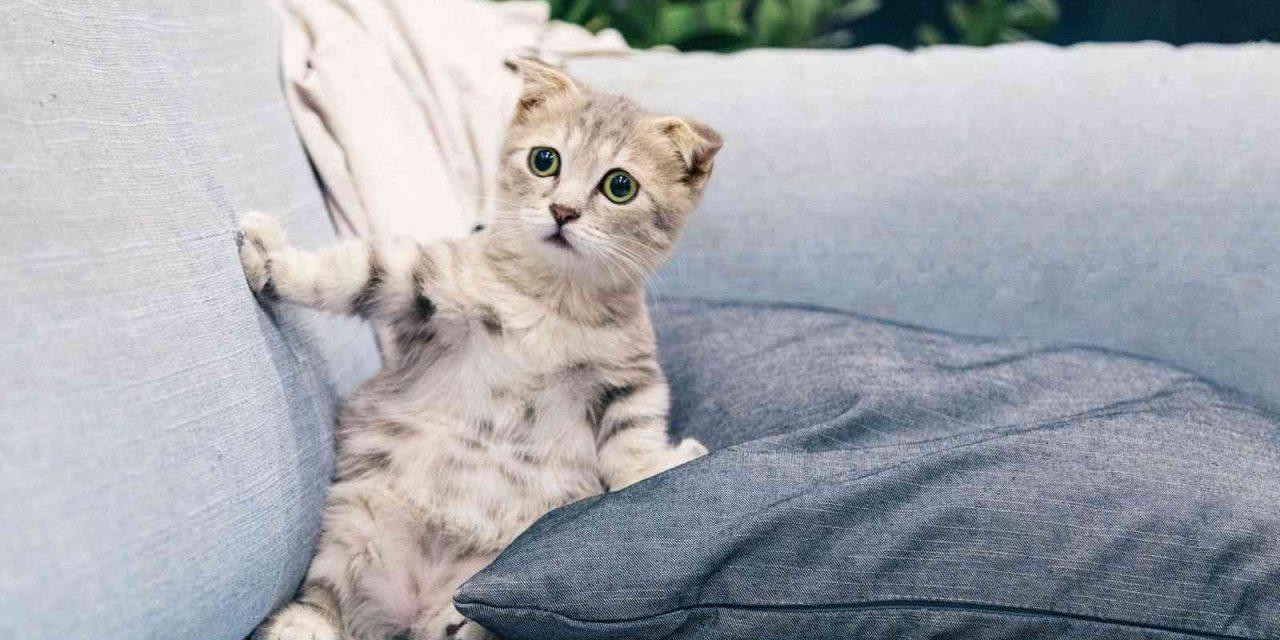 De humanos a animales: ¿puede mi mascota contagiarme el coronavirus?