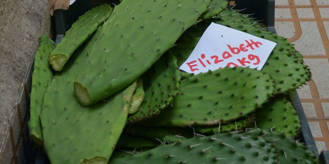 Mexicanos al grito de 'nopales' en España
