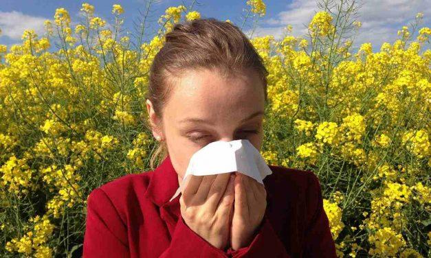 Alergias, un boicot de nuestro sistema inmunológico