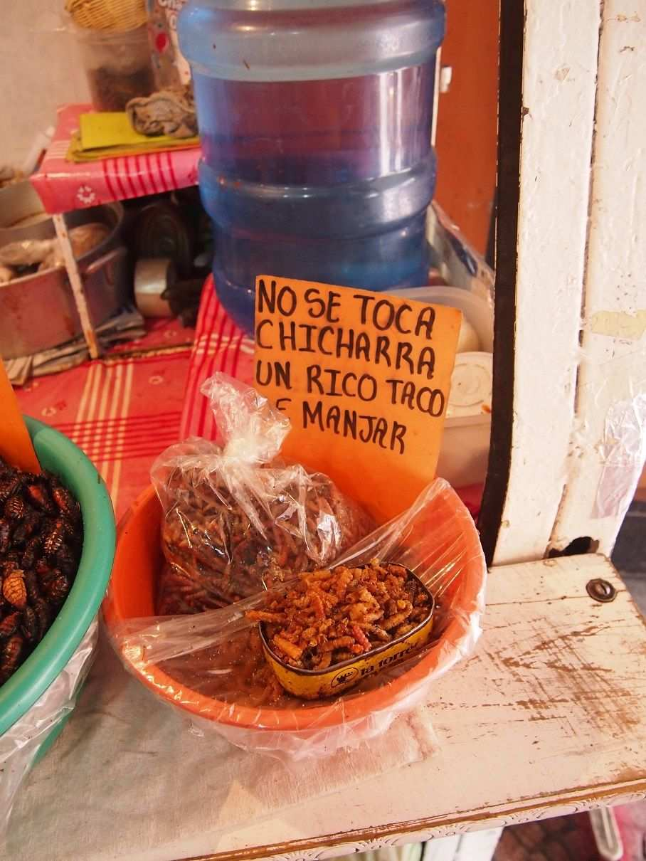 Insectos, un manjar ancestral en México