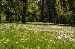 Primavera en El Retiro