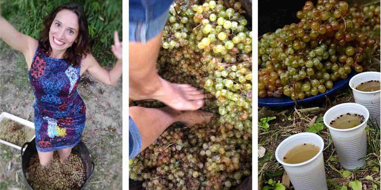 Vendimia en Madrid, una experiencia única que ofrece vinos de toda España